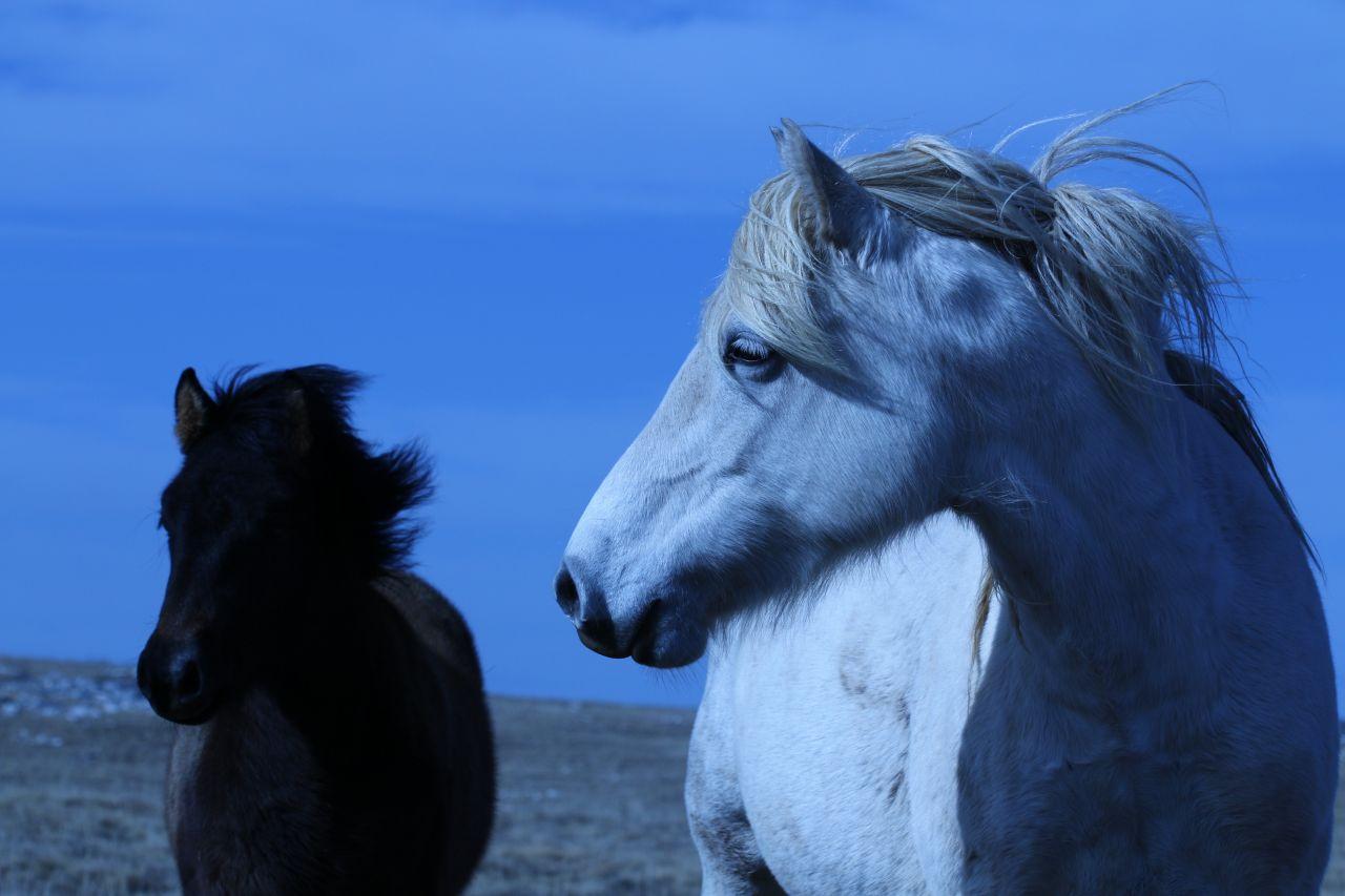 konji-2.jpg