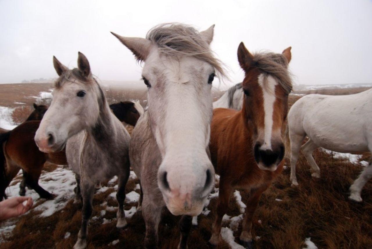 konji-livno.jpg